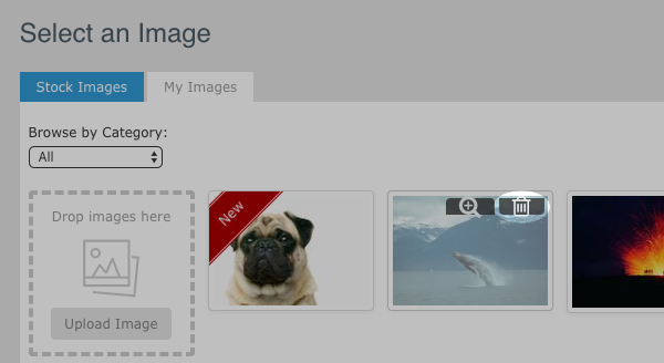 Hover over the image in the gallery and click the trash can to delete it
